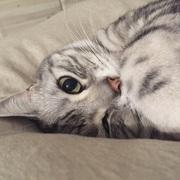 猫と静かにシンプルライフ