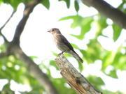 野鳥情報.com