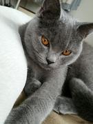 りりぃファミリ〜猫との暮らし
