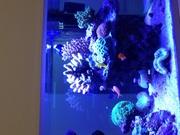とみーの「海水魚とビオトープ始めました」のブログ