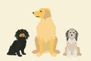 犬好き一家の犬ネタ最新情報