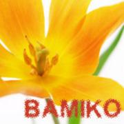 BAMIKOさんのプロフィール
