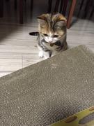 うちの三毛猫
