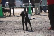 甲斐犬 福のブログ