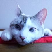 猫を見つめて考える