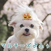 +fu-u日記sono3