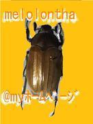 melolonthaの昆虫記[充実した昆虫生活]