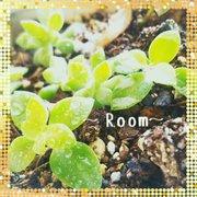 〜Room365〜☆整理収納アドバイザー・笑顔日和