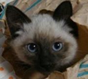 夢が叶った猫生活日記