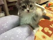 アイコスのブログから子猫ニャン吉の成長日記ブログ