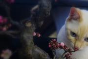 ひろしの盆栽みたいなブログ