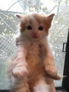 バルーンママと愛猫Luckyのブログ