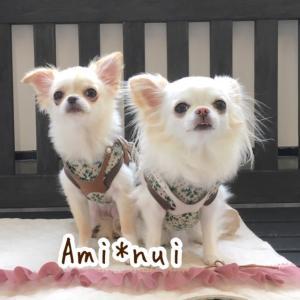 犬服Ami.nui*チワワ姉妹