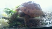 私と愛亀と野菜と。