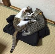 猫が来た!〜梅吉くんとまつこちゃん〜時々、かぐ竹
