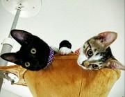 あにはな猫ブログ