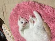 三匹の猫ブログ