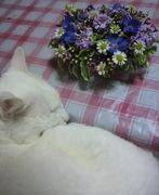 ミユの気ままな花生活♪