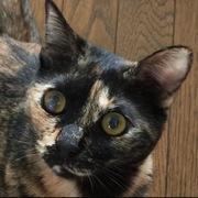 テレとアリア|猫2匹と暮らす