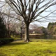 自然を愛する日記ブログ