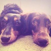 犬2匹と幸せに暮らす為に始めた投資生活