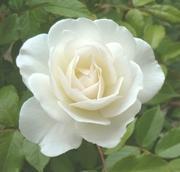 香りを楽しむアロマサロンRosa Blanca.