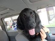 愛人犬への道