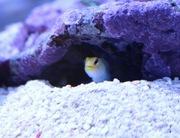 あっきー海水魚飼育ブログ