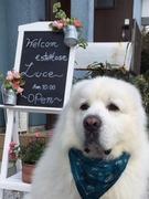 Esute House 〜Luce〜と大型犬HAKUのブログ