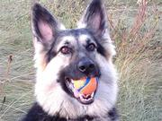 カナダの山奥で犬と田舎暮らし