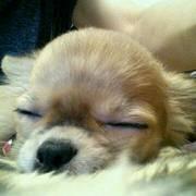 愛犬*ちのと私の.+*:゚+。.☆happyLife.+*:゚+。.♡