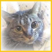 猫カフェ開業を目指し、戦うOL生活 O(≧∇≦)O