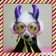 ぷー&ふぇれさんのプロフィール