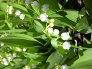 苔リウム&藻リウム