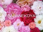 BARANEKOYA通信