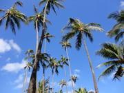ハワイに暮らすをかなえよう!