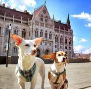 犬4匹と暮らすブダペスト