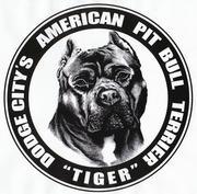 DODGECITY AMERICAN PIT BULL TERRIER