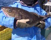 釣り好き兄弟の三陸釣り日記