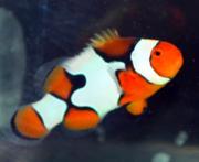 生麦海水魚センター