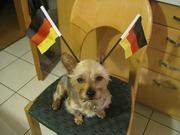 どこのドイツだ。ヨーチワだ!