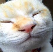 猫が来た 福が来た