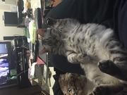 たっちぃの猫カフェ一人旅