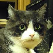 三匹の猫と暮らすホアヒンの毎日@タイランド