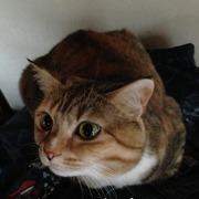 おでぶ猫リキ参上!