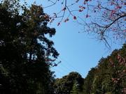 青い空がすき