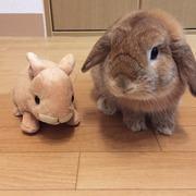 ヒトヒトウサギ