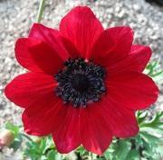 季節の花とガーデニング日記