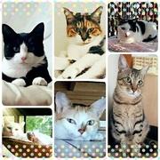 猫Lifeこそが私の人生!!