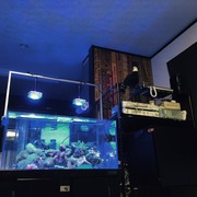 海水アクアリウムブログ